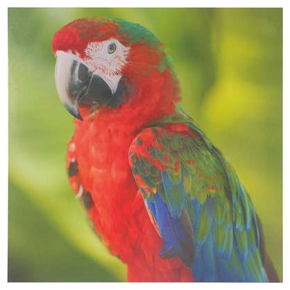 Декобокс 30х30 см Попугай