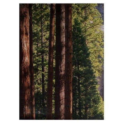Фотообои бумажные Йосемитский водопад 184х254 см