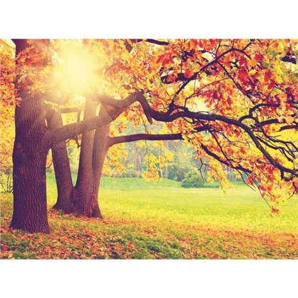 Фотообои бумажные Осень 280х200 cм