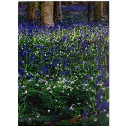 Фотообои бумажные Вечный лес 368x254 см