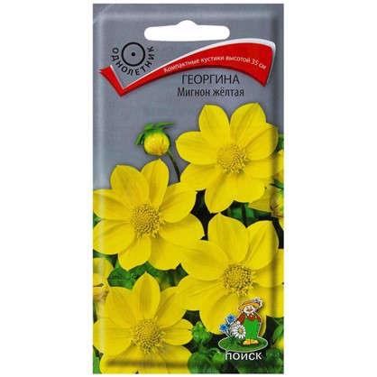 Георгина Мигнон цвет жёлтый