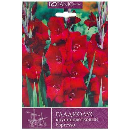 Гладиолус крупноцветковый Эспрессо