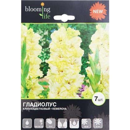 Гладиолус крупноцветковый Кемерово