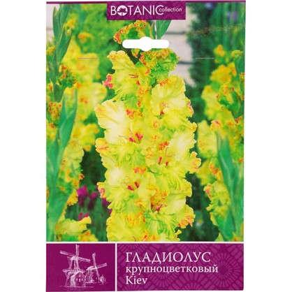 Гладиолус крупноцветковый Киев