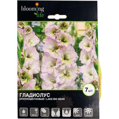 Гладиолус крупноцветковый Лейк Биг Бир