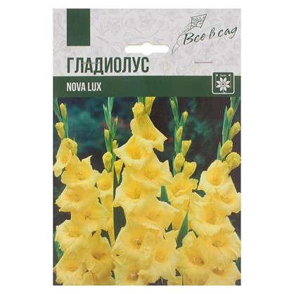 Гладиолус крупноцветковый Нова Люкс