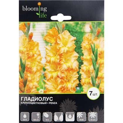 Гладиолус крупноцветковый Пенза