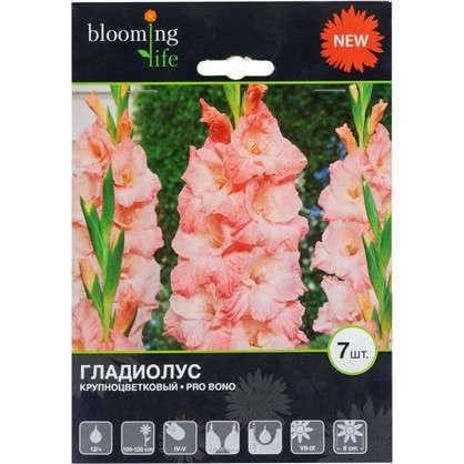 Гладиолус крупноцветковый Про Боно