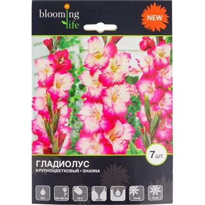 Гладиолус крупноцветковый Шанна