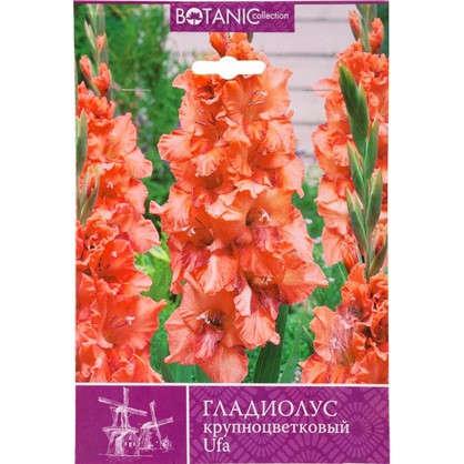 Гладиолус крупноцветковый Уфа