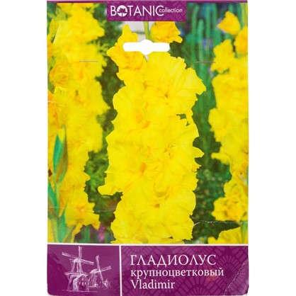 Гладиолус крупноцветковый Владимир