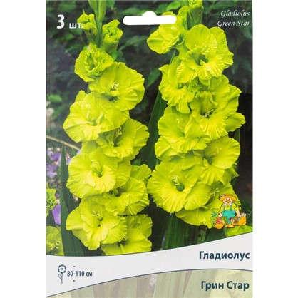 Гладиолусы крупноцветковые Грин Стар размер луковицы 10/12 1 шт.
