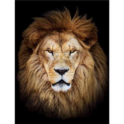 Холст 50х70 см Лев