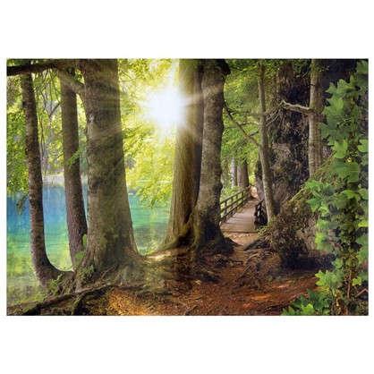 Холст 70х50 см Солнце в лесу