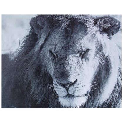 Картина без рамы 40х50 см Дикий лев