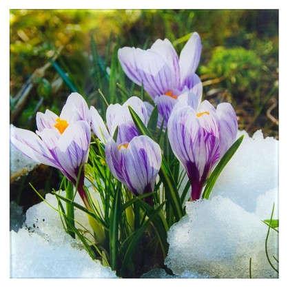 Картина на стекле 30х30 см Цветы крокусы