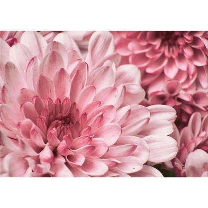 Картина на стекле 50x70 см Хризантема