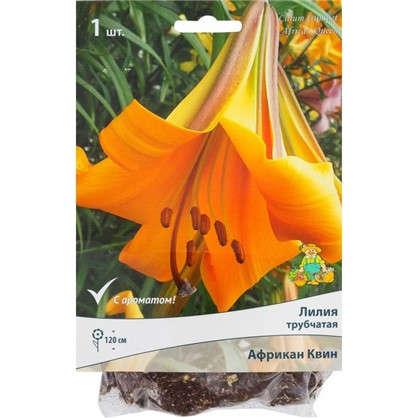 Лилии трубчатые Африкан Квин размер луковицы 14/16 1 шт.