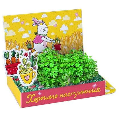 Набор подарочный для выращивания Веселые моменты Хорошего настроения!