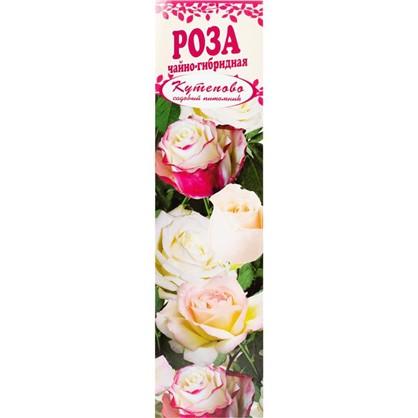 Роза чайно-гибридная Дольче Вита в коробке