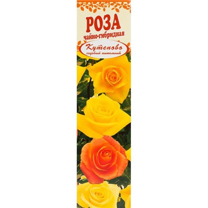 Роза чайно-гибридная Ландорра в коробке