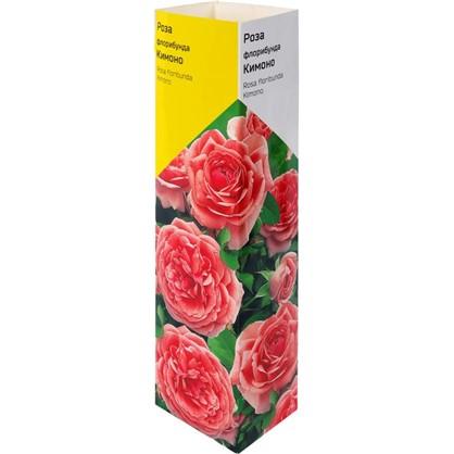 Роза флорибунда Кимоно в тубе
