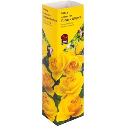 Роза Плетистая эконом в ассортименте
