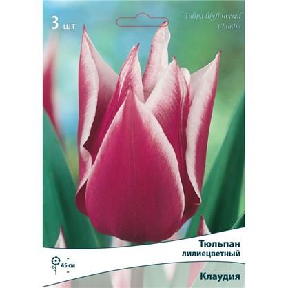 Тюльпан лилиецветный Клаудия высота 40 см 3 шт.